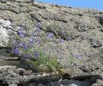 des fleurs sur le pot de fleurs géologique