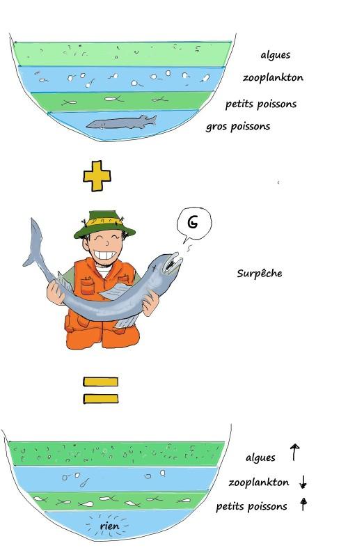 Cascade trophique, mon interprétation d'un diagramme original de Brian  Parker et Lara Minja  en p. 173