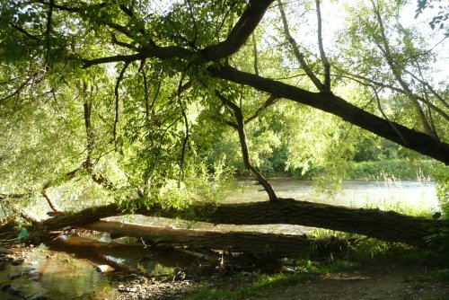 S'assoir au bord de la rivière, épier les conversations des branches au soleil...