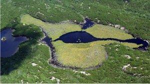 Un lac très eutrophié de la ELA