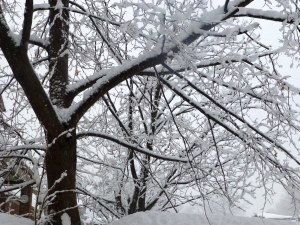 Arbre chargé de neige