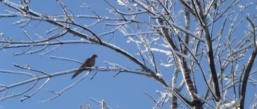 Une tourterelle triste posée sur une branche, derrière la maison