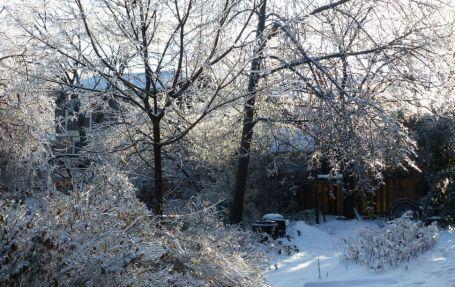 Notre cour arrière est un jardin de givre, photo prise le 24 décembre dernier au matin...