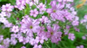 Des peties fleurs