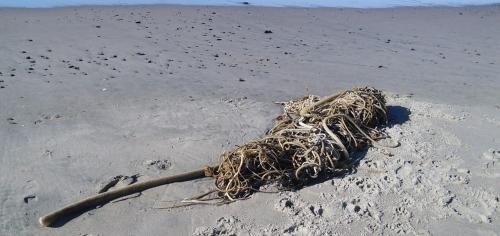 Pour une auteure de SF, quelle aubaine que ces algues emmêlées!