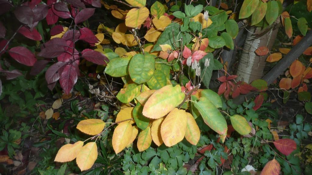 Un petit arbre devant ma maison, aux feuilles lumineuses