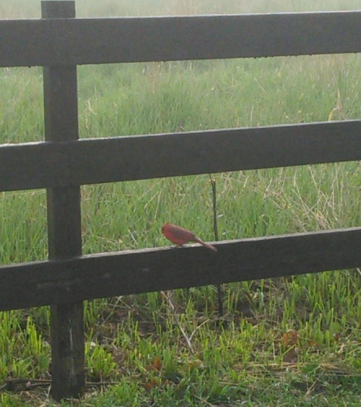 Un cardinal, perché sur la même barrière.
